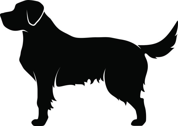 illustrazioni stock, clip art, cartoni animati e icone di tendenza di vector black silhouette of a dog. - retriever