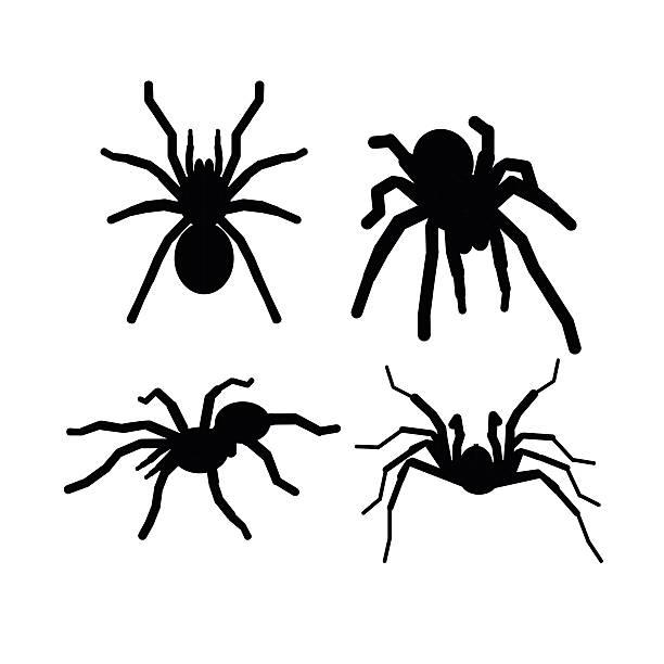 vector  black silhouette spider tarantola set sign - tarantula stock illustrations