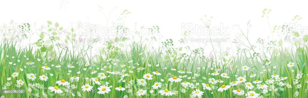 Vector  blossoming flowers  field. – Vektorgrafik