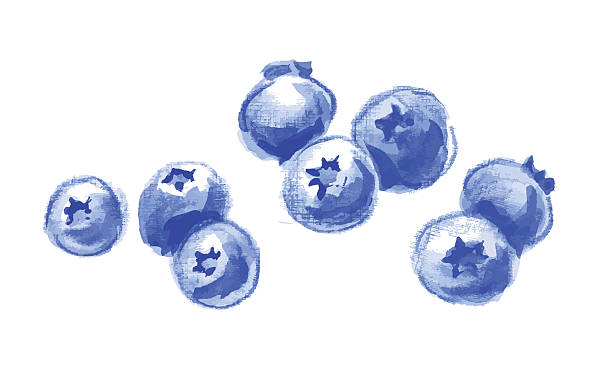 vector blueberries without leaves, drawing by hand. Handful  wat vector art illustration