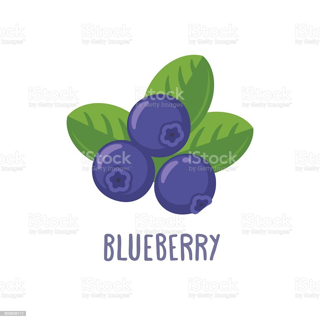Vector blueberry icon vector art illustration