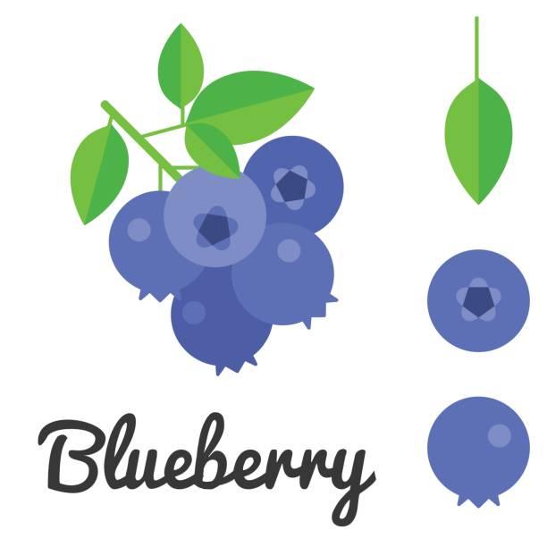 illustrazioni stock, clip art, cartoni animati e icone di tendenza di vector blueberry - mirtilli