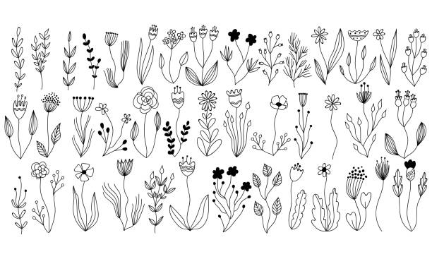 wektorowa kolekcja botaniczna z kwiatowych i ziołowych elementów. izolowane rośliny wektorowe, gałęzie i kwiaty w projekcie szkicu atramentu. ręcznie rysowane botaniczne doodle zestaw do kart, zaproszeń, logo, diy projektów - bazgroły rysunek stock illustrations