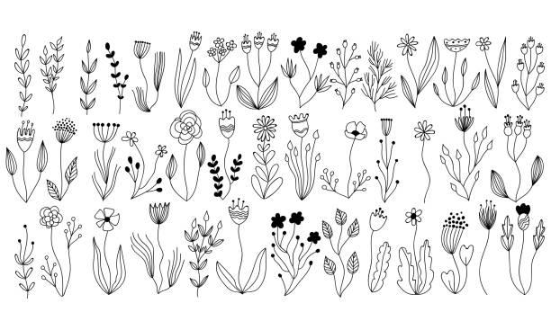 벡터 식물은 꽃과 허브 요소의 컬렉션입니다. 격리 된 벡터 식물, 분 지 및 잉크에 꽃 디자인을 스케치합니다. 손으로 그린 식물 낙서 카드, 초대장, 로고, diy 프로젝트에 대 한 설정 - 꽃 식물 stock illustrations