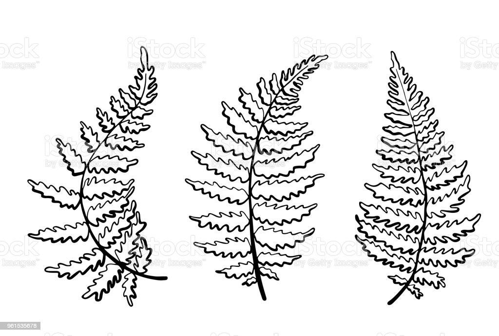 Ilustración de Ilustración Botánica De Vector De La Hoja De Helecho ...