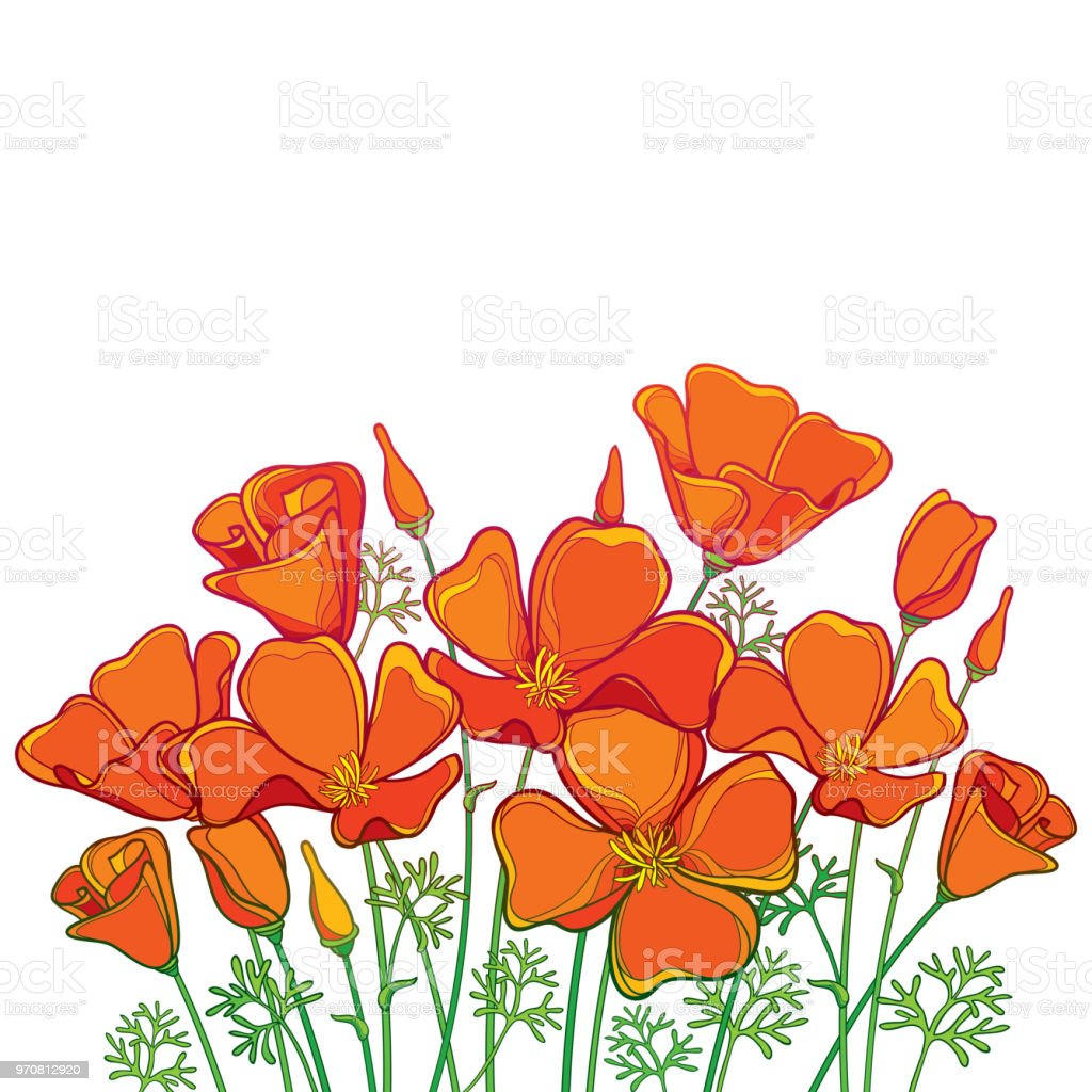 Vector Bouquet Of Outline Orange California Poppy Flower Or