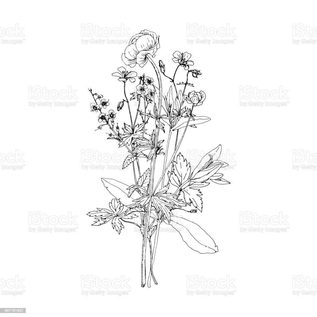 Bouquet De Vecteur Avec Le Dessin De Plantes Sauvages Vecteurs
