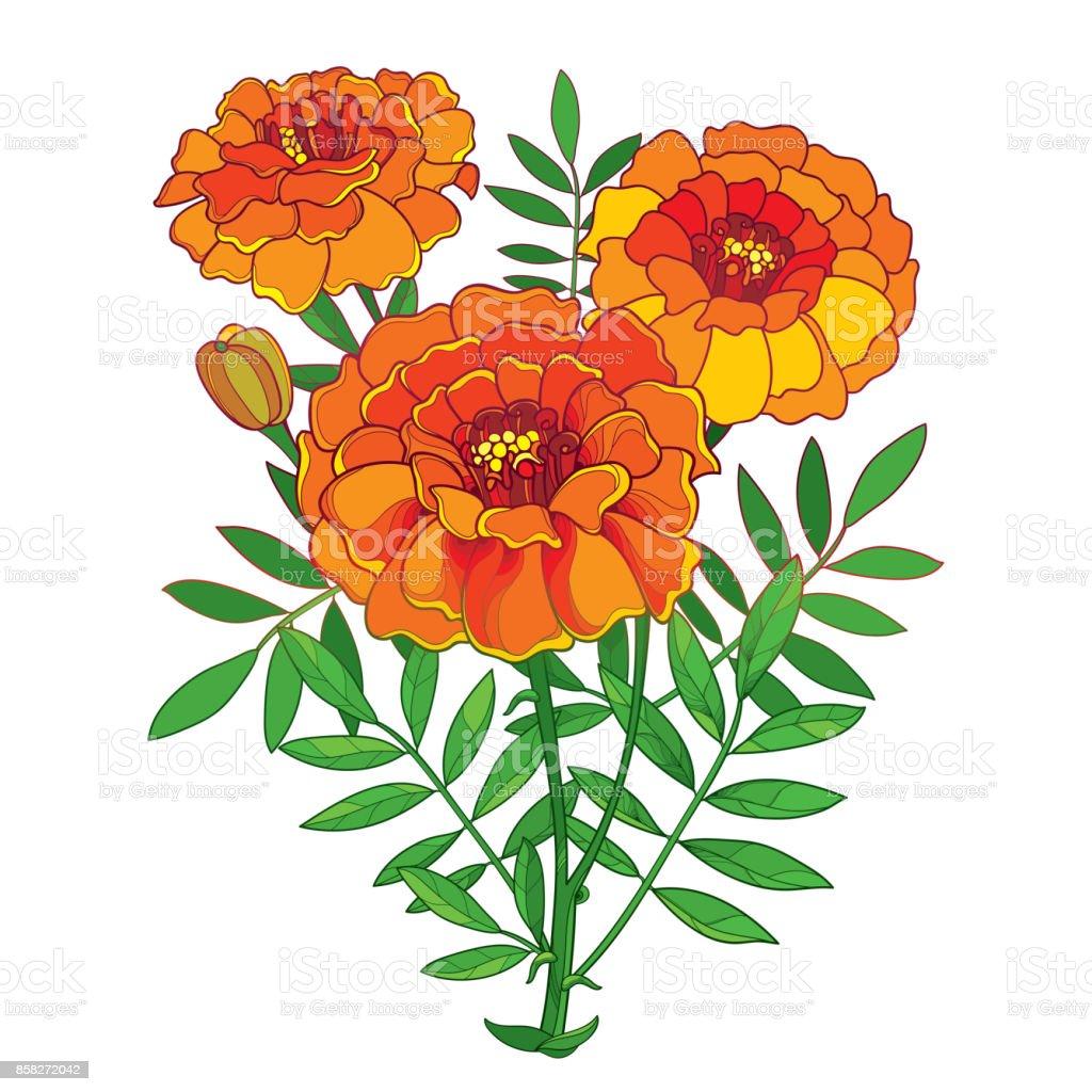 marigold flower clip art alternative clipart design u2022 rh extravector today marigold clipart black and white marigold flower clipart black and white