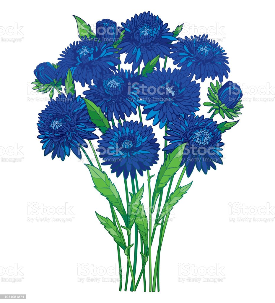 Vector Bouquet With Outline Blue Aster Flower Ornate Green Foliage
