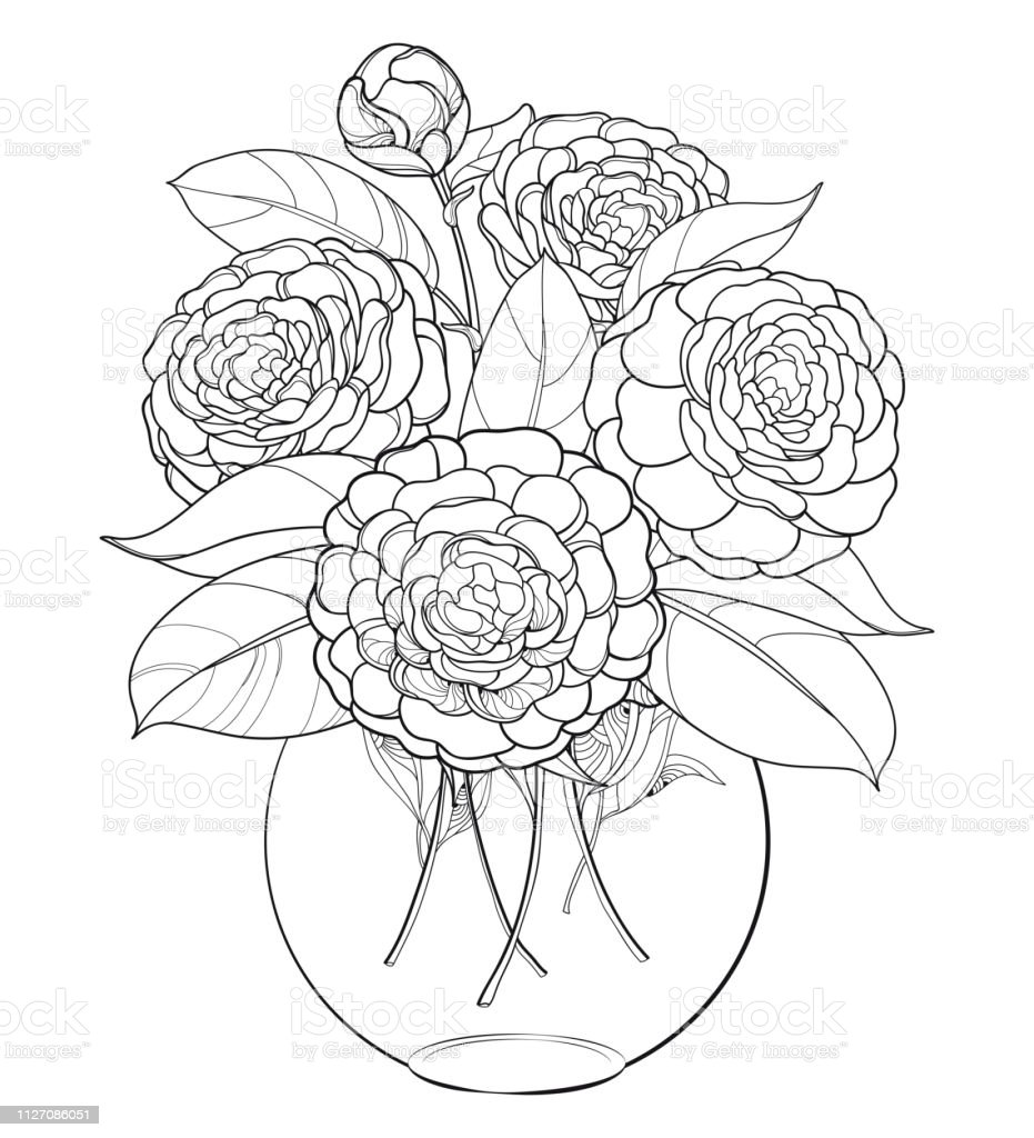Vector bouquet with outline Camellia flower bunch, bud and leaf in...