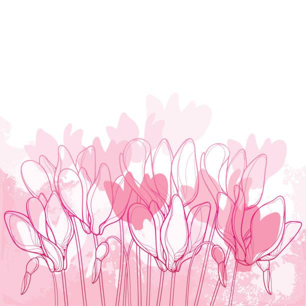 vektor-bouquet mit umriss alpenveilchen oder alpine violetter blumenstrauß und bud in pink auf pastell strukturierten hintergrund. - alpenveilchen stock-grafiken, -clipart, -cartoons und -symbole