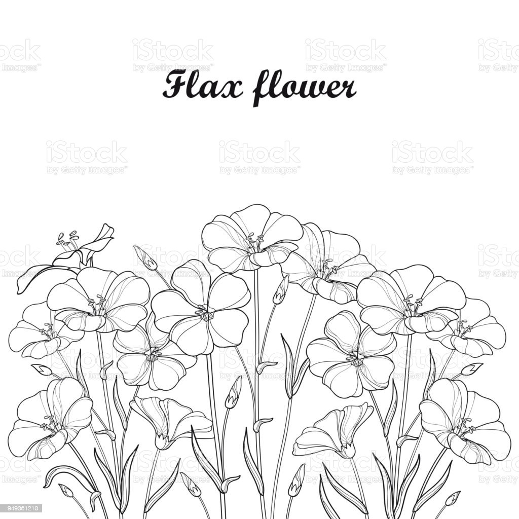 Vector Bouquet With Outline Flax Plant Or Linseed Or Linum Flower