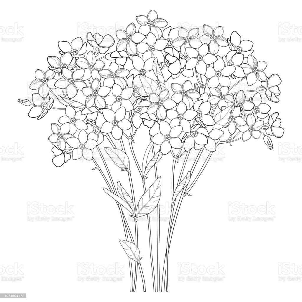 Coloriage Fleur Myosotis.Bouquet De Vecteur Avec Contour Noubliezmoi Pas Ou Myosotis Bouquet