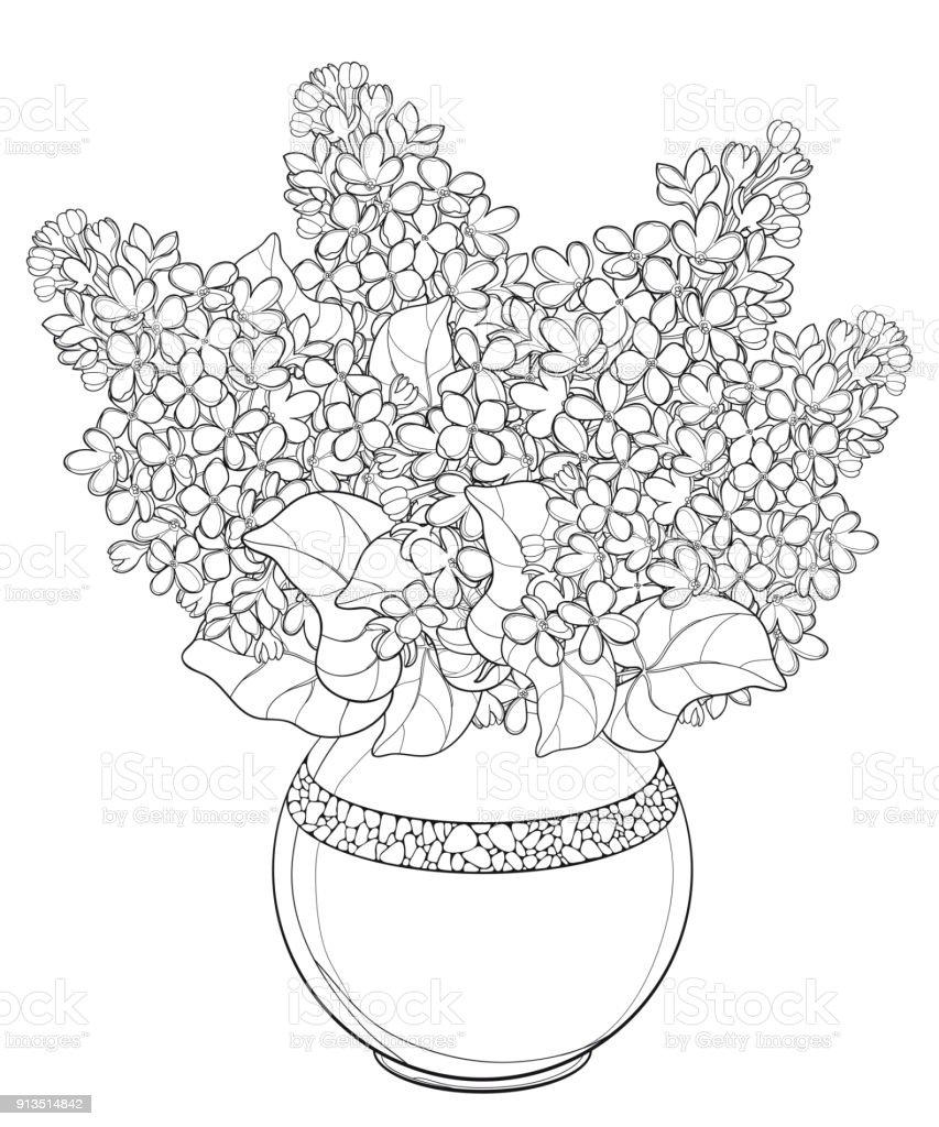 Ilustración de Ramo De Vector Con Contorno Lila O Syringa Flor Brote ...