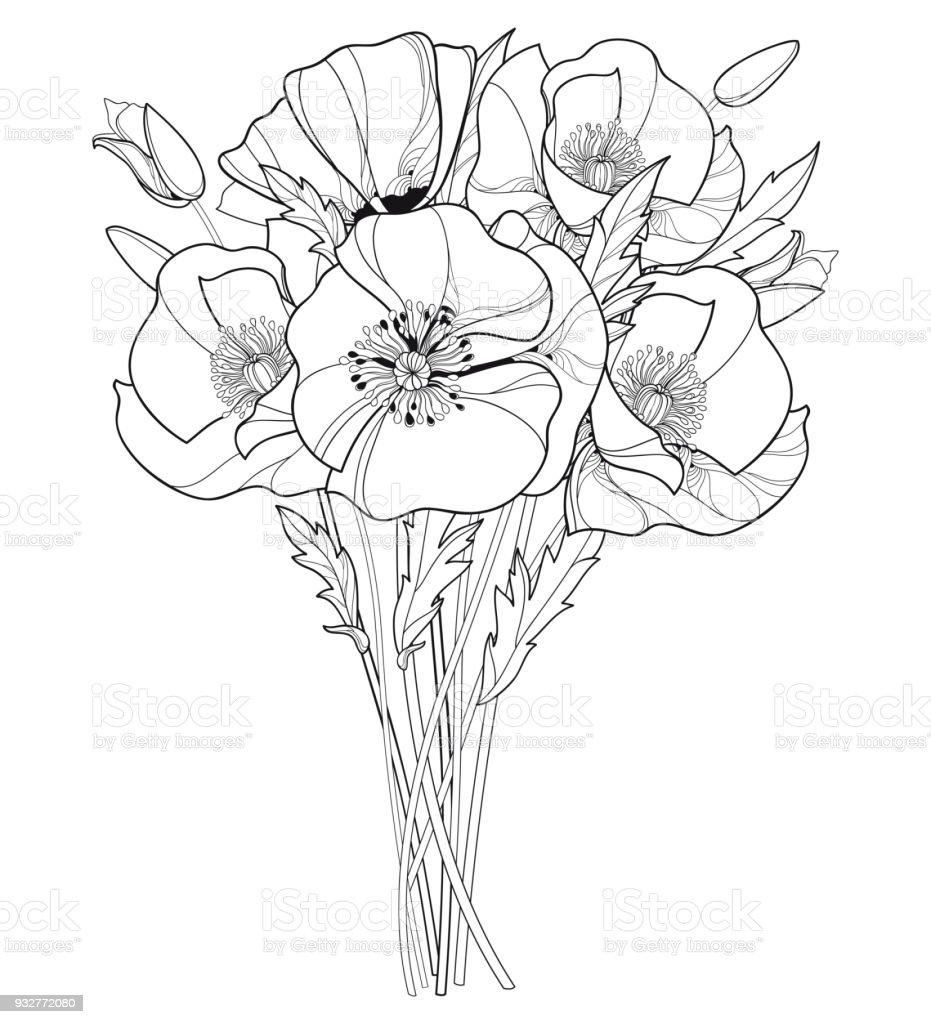 Vector bouquet with outline poppy flower bud and leaves in black vector bouquet with outline poppy flower bud and leaves in black isolated on white background izmirmasajfo