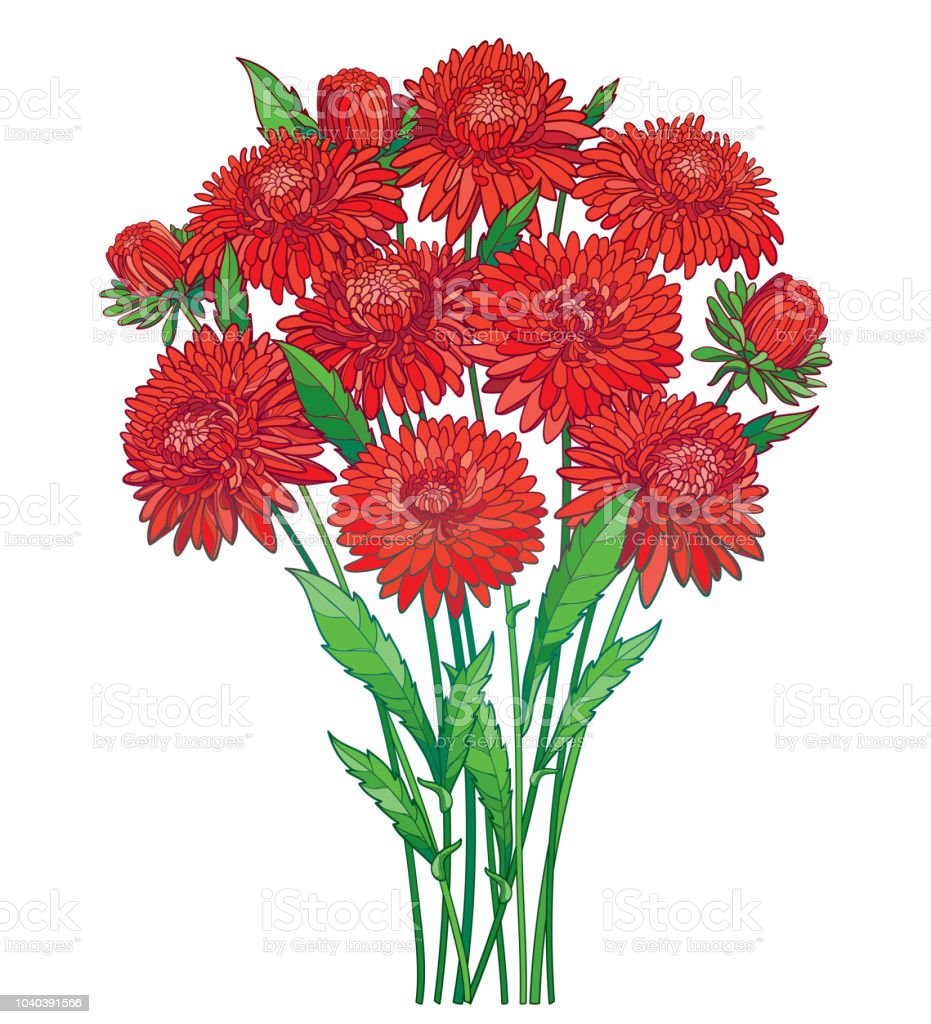 Vector bouquet with outline red aster flower ornate green foliage vector bouquet with outline red aster flower ornate green foliage and bud isolated on white izmirmasajfo