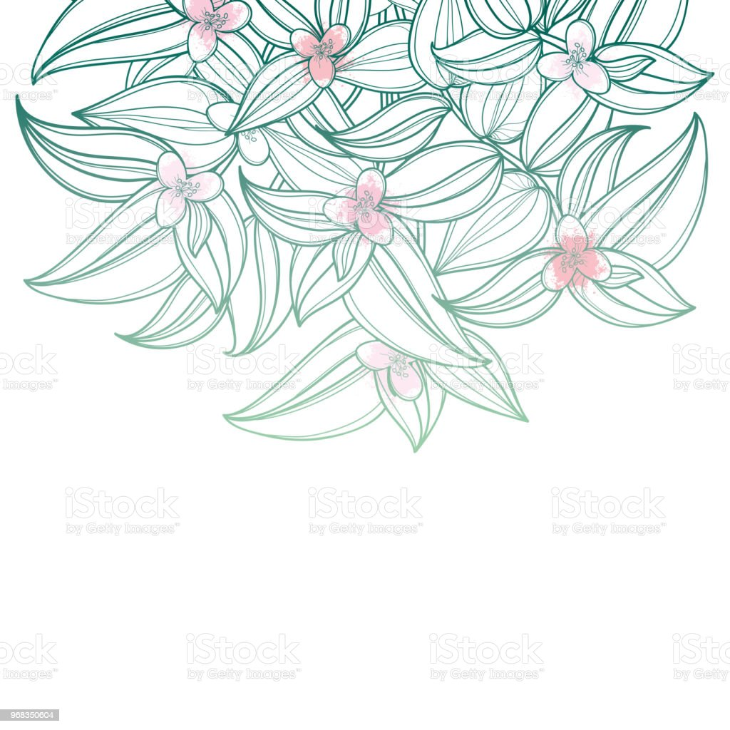 Vector bouquet with outline tradescantia or inch plant or wandering vector bouquet with outline tradescantia or inch plant or wandering jew flower flower and leaf izmirmasajfo