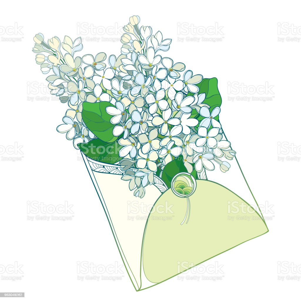 Vector Bouquet With Outline White Lilac Or Syringa Flower And Green
