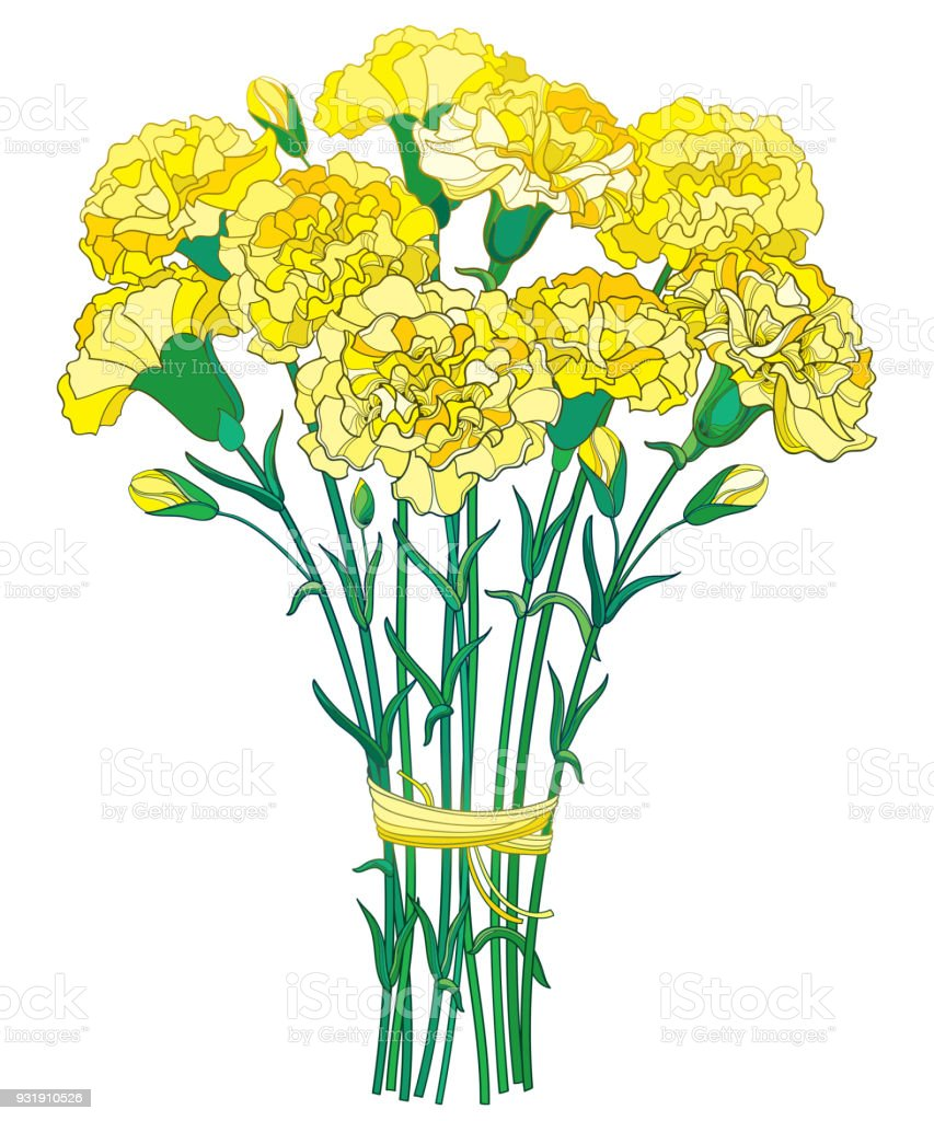 Vector bouquet with outline yellow carnation or clove flower bud and vector bouquet with outline yellow carnation or clove flower bud and green leaf isolated on mightylinksfo