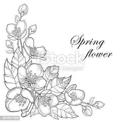 Vector Branch Of Outline Jasmine Flowers Bud And Leaves In ...