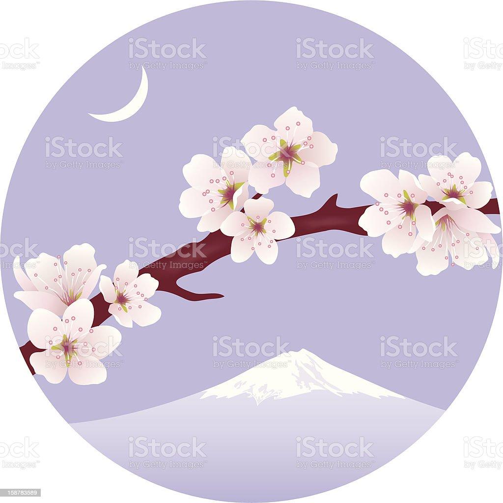 vector branch of sakura (cherry) royalty-free stock vector art