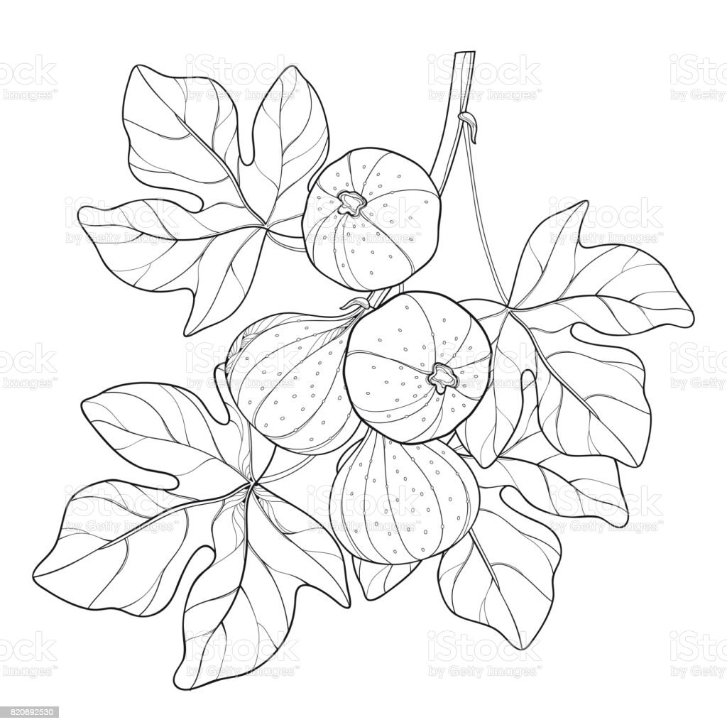 leaf vector outline the best vector 2017
