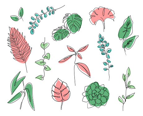 Vector branches and leaves. Continuous line leaves print tropical palm, eucalyptus, monstera, succulent, house plants.