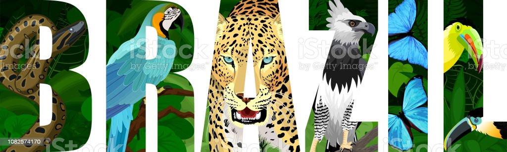 Vector a ilustração do Brasil com a jaguar, Harpia, arara azul ara, anaconda, morfo azul e Tucano - ilustração de arte em vetor