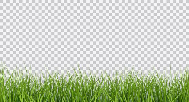 ilustrações, clipart, desenhos animados e ícones de fronteira de vetor realista verde brilhante da grama sem emenda isolada em fundo transparente - gramado terra cultivada
