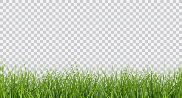 ilustrações de stock, clip art, desenhos animados e ícones de vector bright green realistic seamless grass border isolated on transparent background - erva