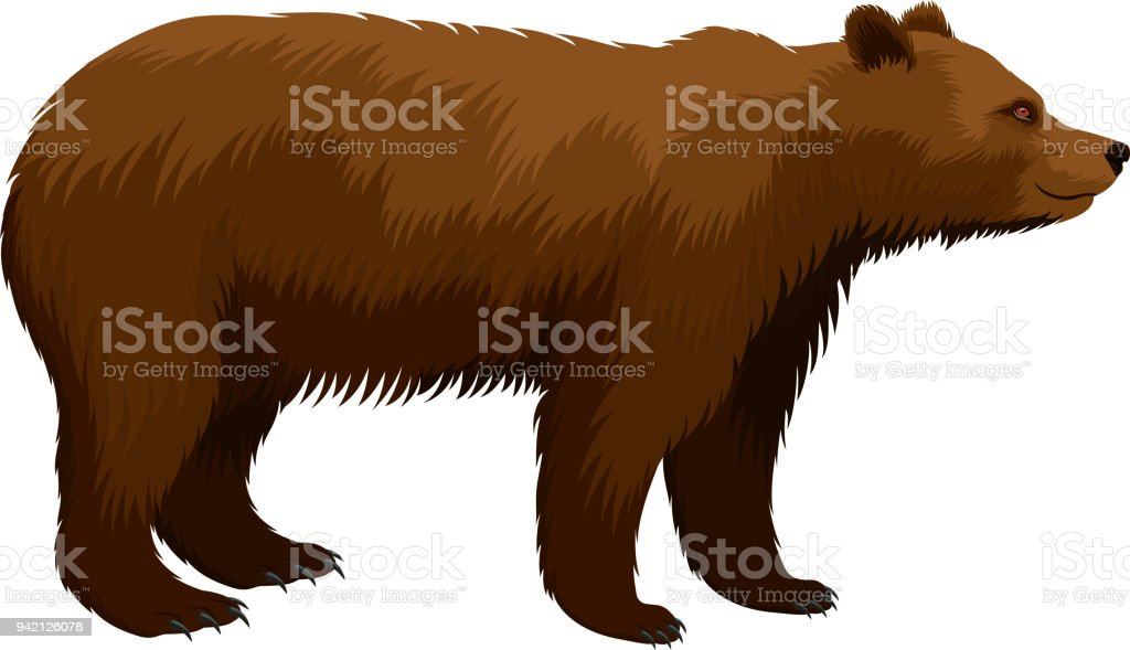 vector brown grizzly bear vector art illustration