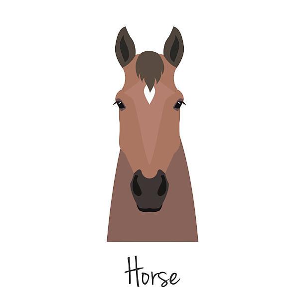 vector brown horse head isolated. flat, cartoon style object - tierkopf stock-grafiken, -clipart, -cartoons und -symbole