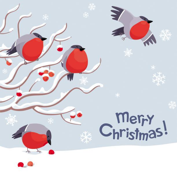 vektor, gimpel und rowan-weihnachts-bild - dompfaff stock-grafiken, -clipart, -cartoons und -symbole