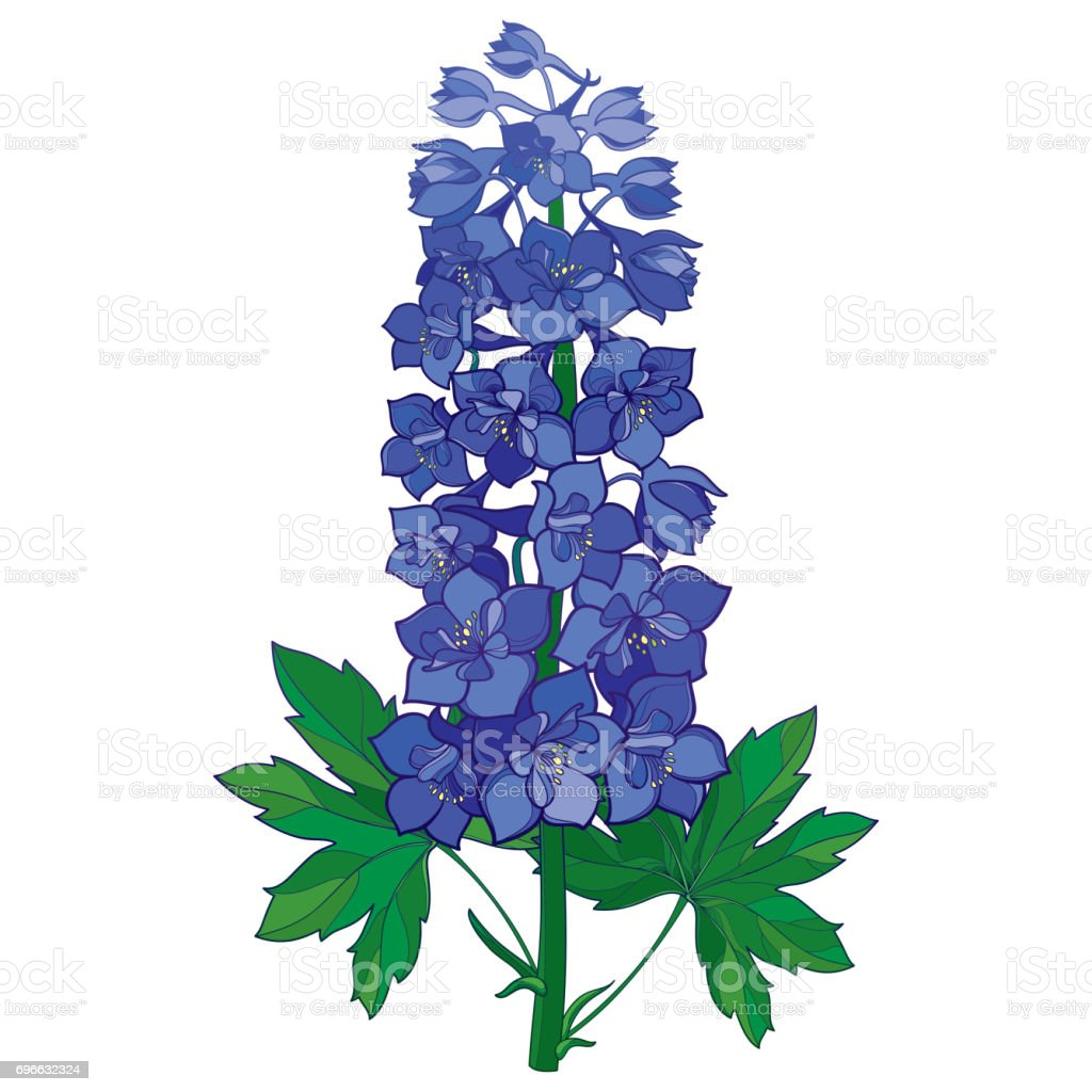 Vector bunch with ornamental blue delphinium or larkspur flower vector bunch with ornamental blue delphinium or larkspur flower isolated on white royalty free mightylinksfo