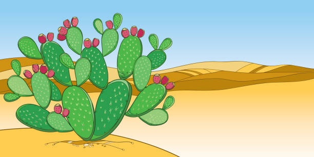 Top 60 Prickly Pear Fruit Clip Art, Vector Graphics and ...