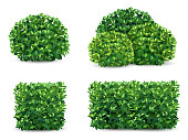 Vector bush in different forms. An ornamental plant shrub for the design of a park, a garden or a green fence.