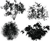 istock Vector bushes. 165586492