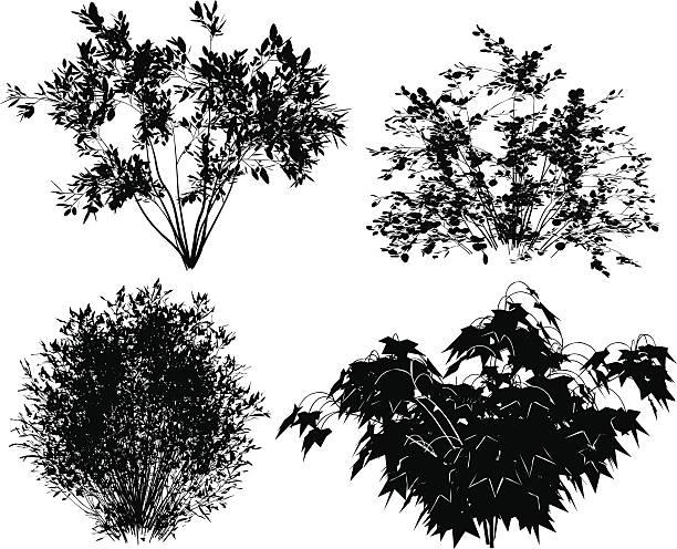 bildbanksillustrationer, clip art samt tecknat material och ikoner med vector bushes. - buske