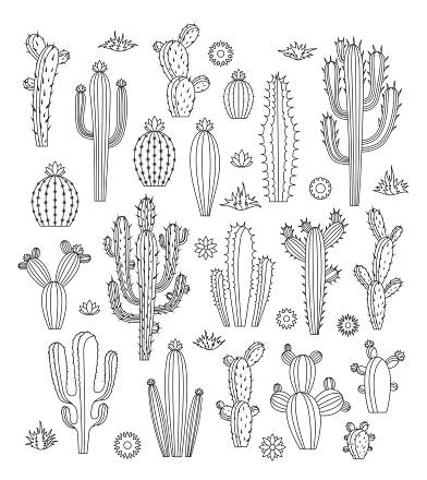 Vector cactus icons