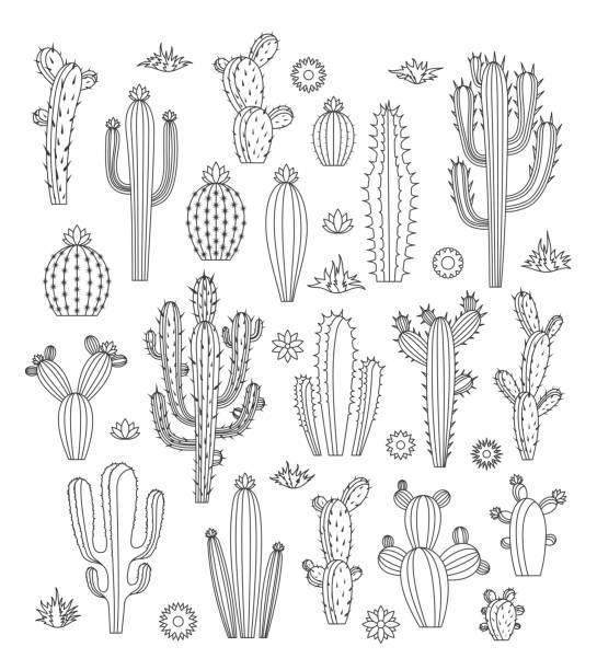 stockillustraties, clipart, cartoons en iconen met vector cactus pictogrammen - cactus