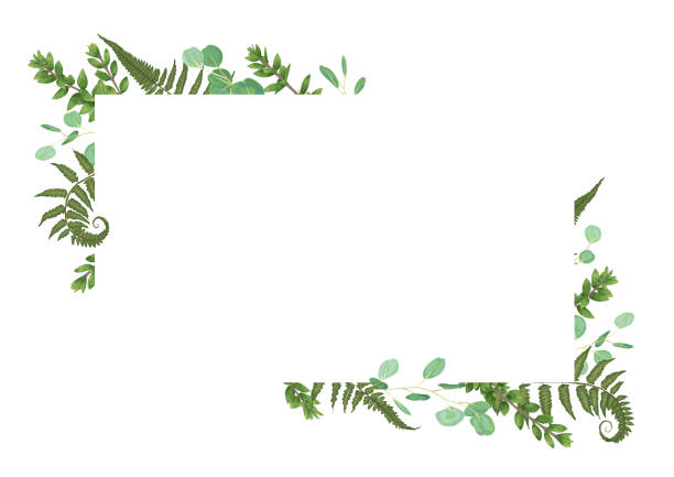 Vector card floral design with green watercolor, eucalyptus, forest fern, herbs, eucalyptus, branches boxwood, buxus, botanical green, decorative horizontal frame, square Vector card floral design with green watercolor, eucalyptus, forest fern, herbs, eucalyptus, branches boxwood, buxus, botanical green, decorative horizontal frame, square. Cute greeting, postcard template, wedding invite fern stock illustrations