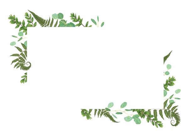 stockillustraties, clipart, cartoons en iconen met vector kaart bloemmotief met groene aquarel, eucalyptus, bos fern, kruiden, eucalyptus, takken buxus, buxus, botanische groen, decoratieve horizontale frame, vierkante - varen