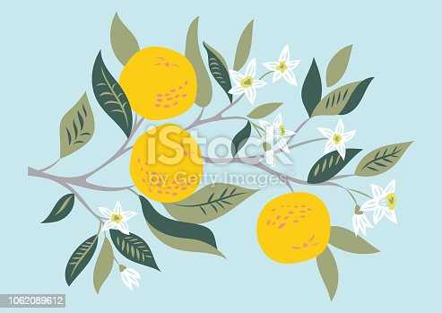 Vector card with branch of oranges in bloom