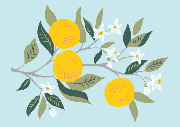 vector card Vector card with branch of oranges in bloom fruit borders stock illustrations