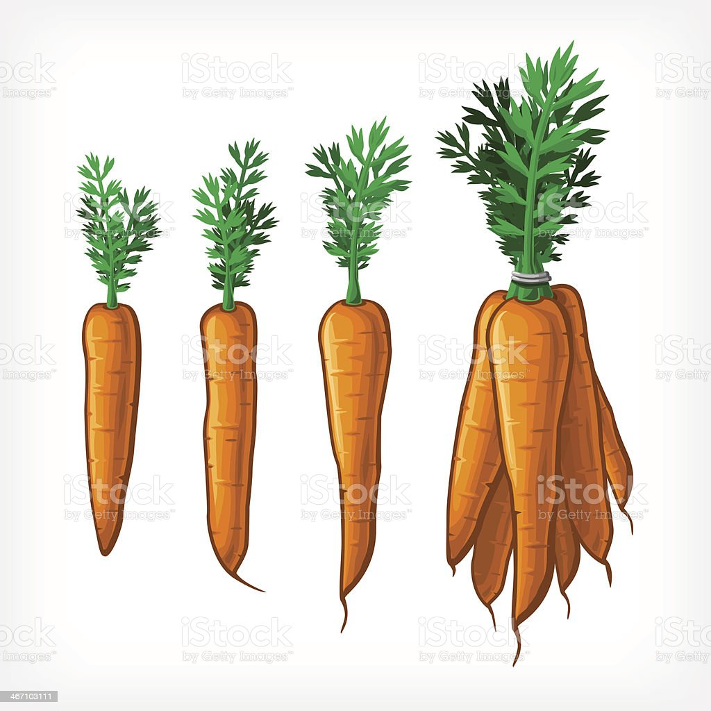 Vector Carrots royalty-free stock vector art