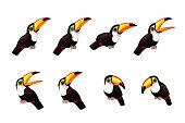 vector cartoon animal clipart: cute toco toucans