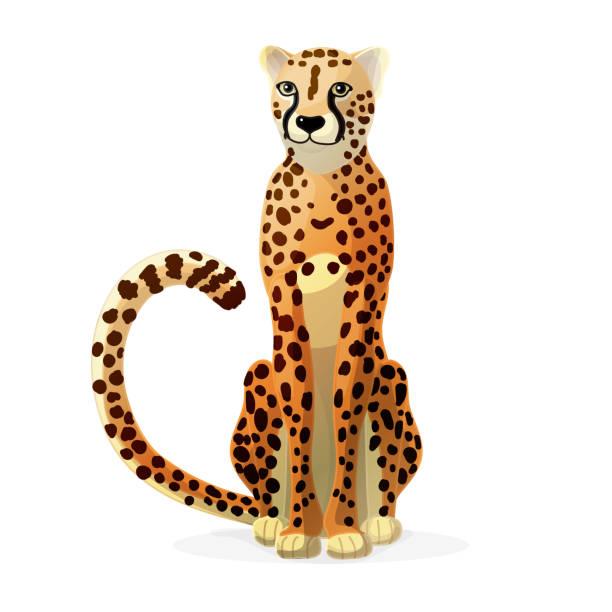stockillustraties, clipart, cartoons en iconen met vector cartoon dierlijke illustraties - jachtluipaard