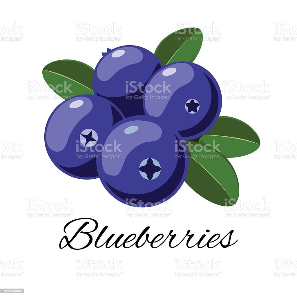 vector cartoon blueberries with leaves isolated on white
