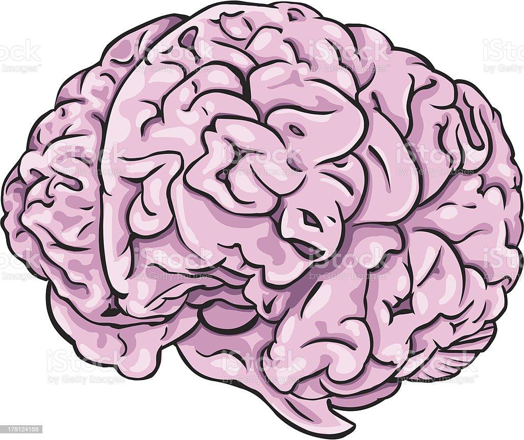 Vector cartoon brain royalty-free vector cartoon brain stock vector art & more images of anatomy