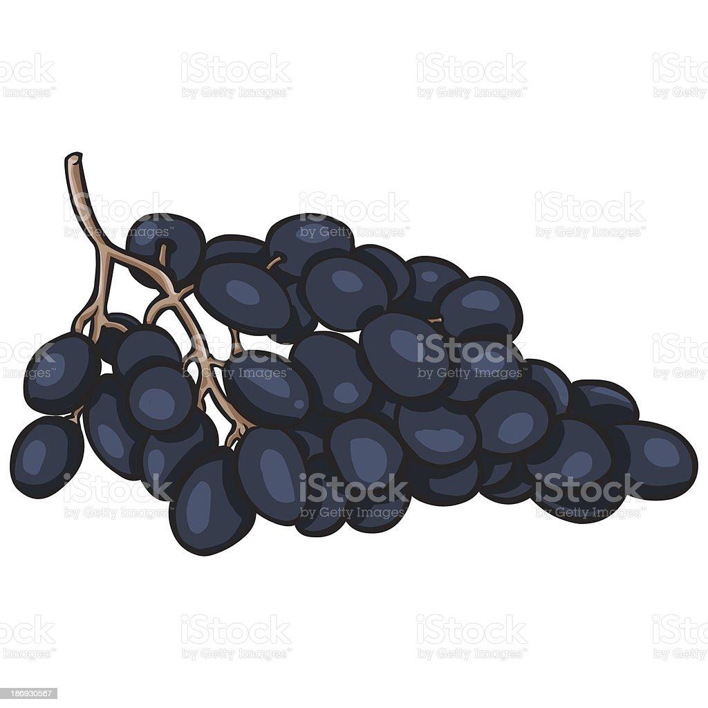 vector cartoon bunch of grapes royalty-free stock vector art